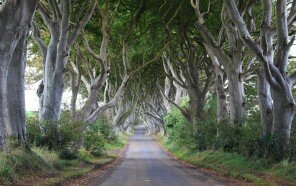 dark-hedges-ireland.jpg