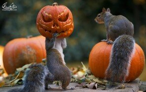 autumn-animals-14__880.jpg