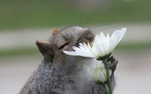 animals-smelling-flowers-42__880.jpg