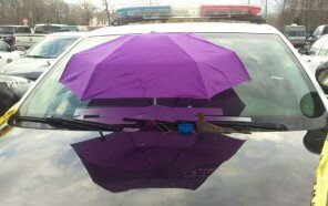 police-bird-umbrella-dove-nest-car-hood-parma-3.jpg