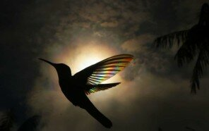 hummingbird-wings-rainbow-christian-spencer-5d2841c3264e9__700.jpg
