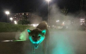 animals-with-threatening-auras-501-5d920cd03e39f__700.jpg