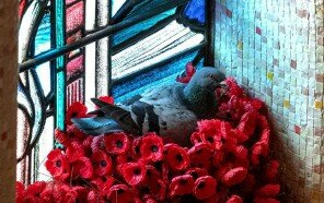 pigeon-poppies-nest-remembrance-day-australian-war-memorial-2-5dc91e7f30201__700.jpg